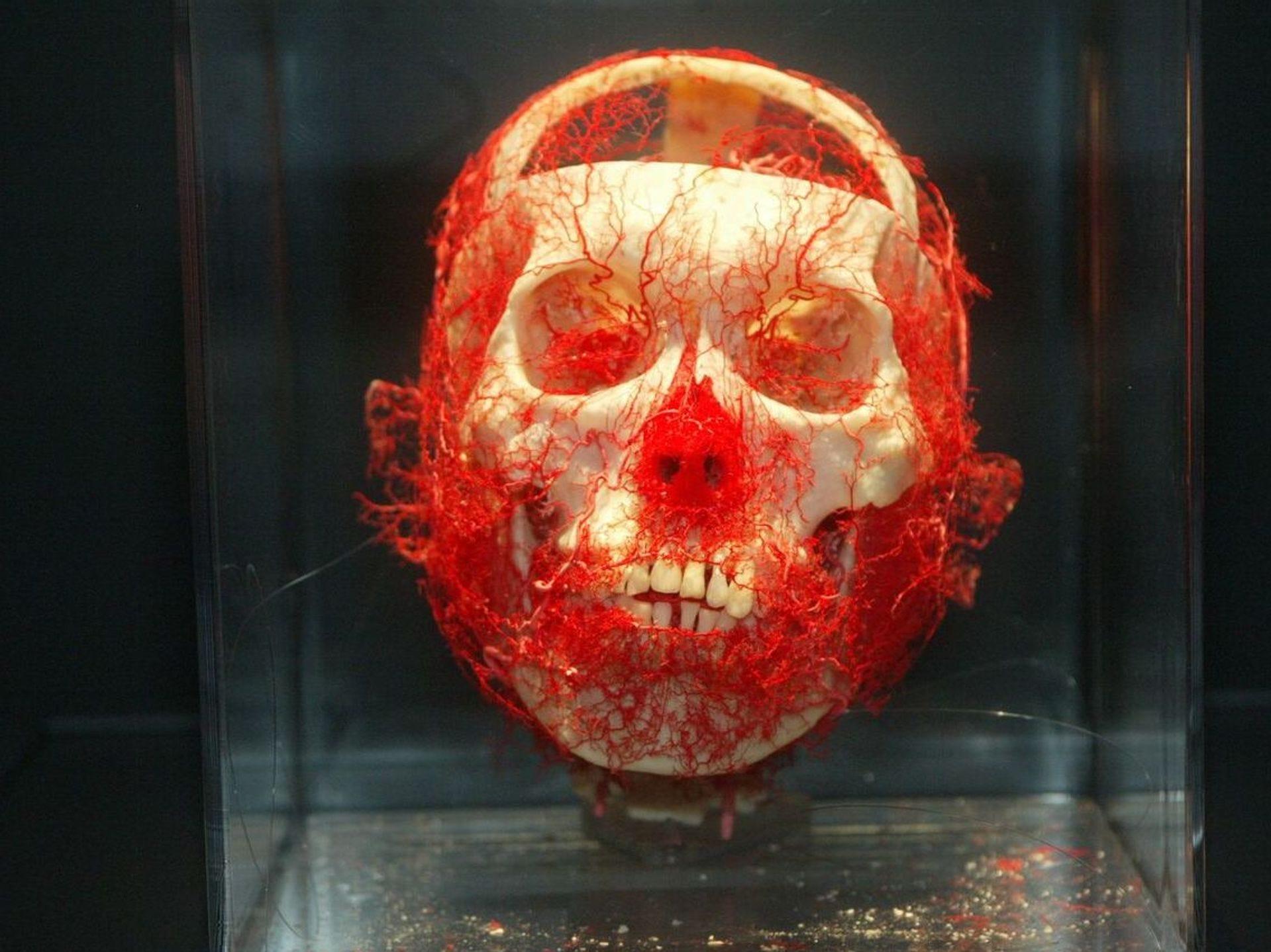 Se muestran más de 200 muestras de cuerpos humanos enteros o parciales.