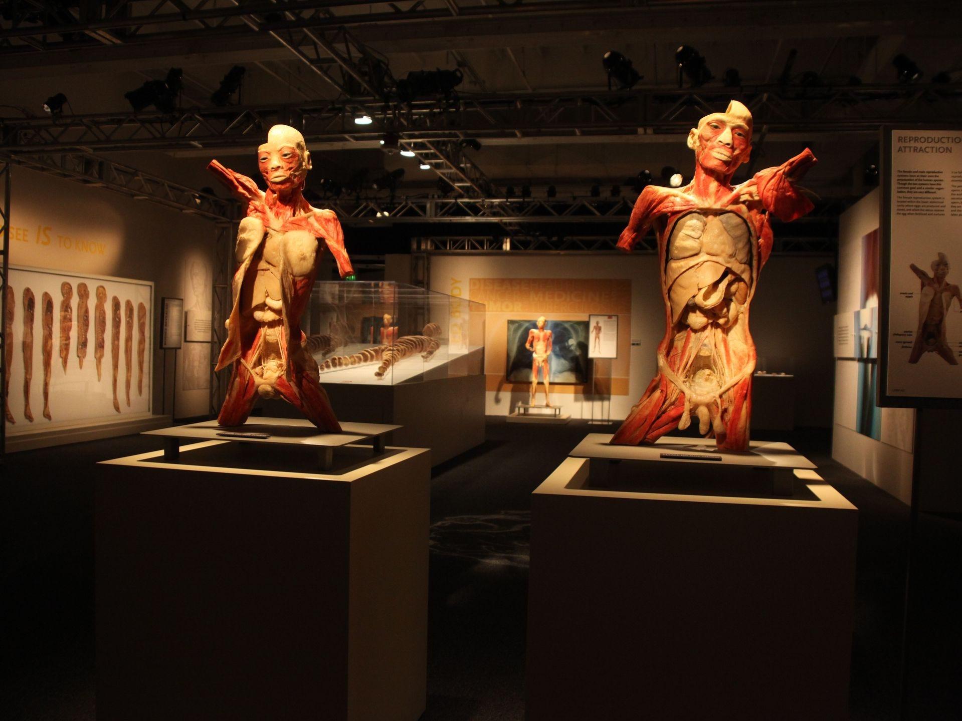 Cada una de las nueve galerías ofrece una visión detallada de una parte específica del cuerpo, su función e importancia para el resto del cuerpo.