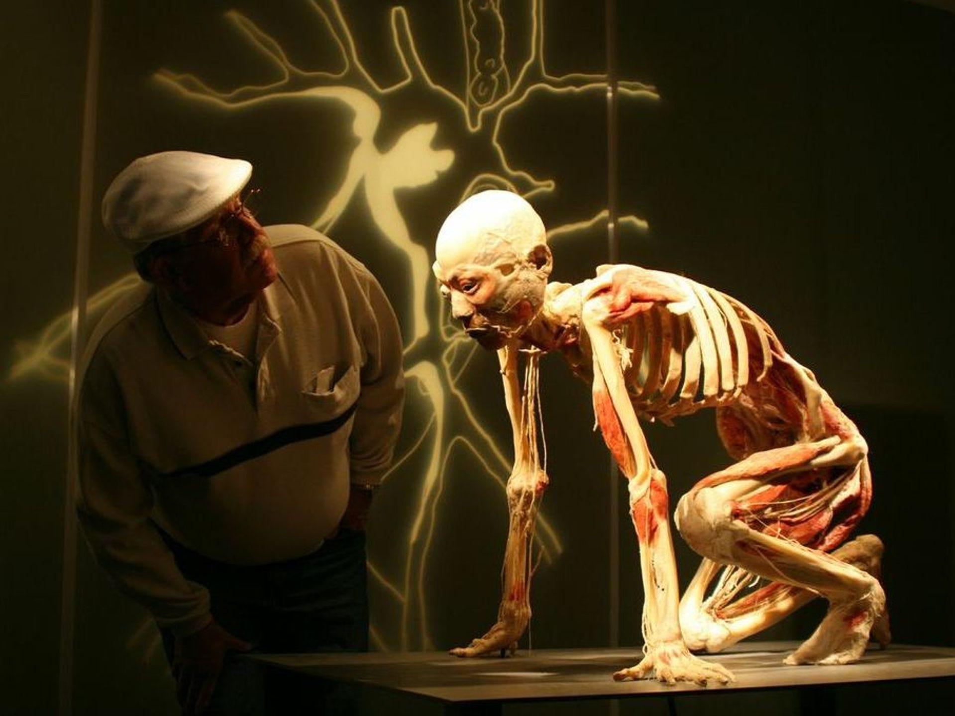 """Los cuerpos son reales, preservados por una técnica llamada """"Preservación de polímeros""""."""