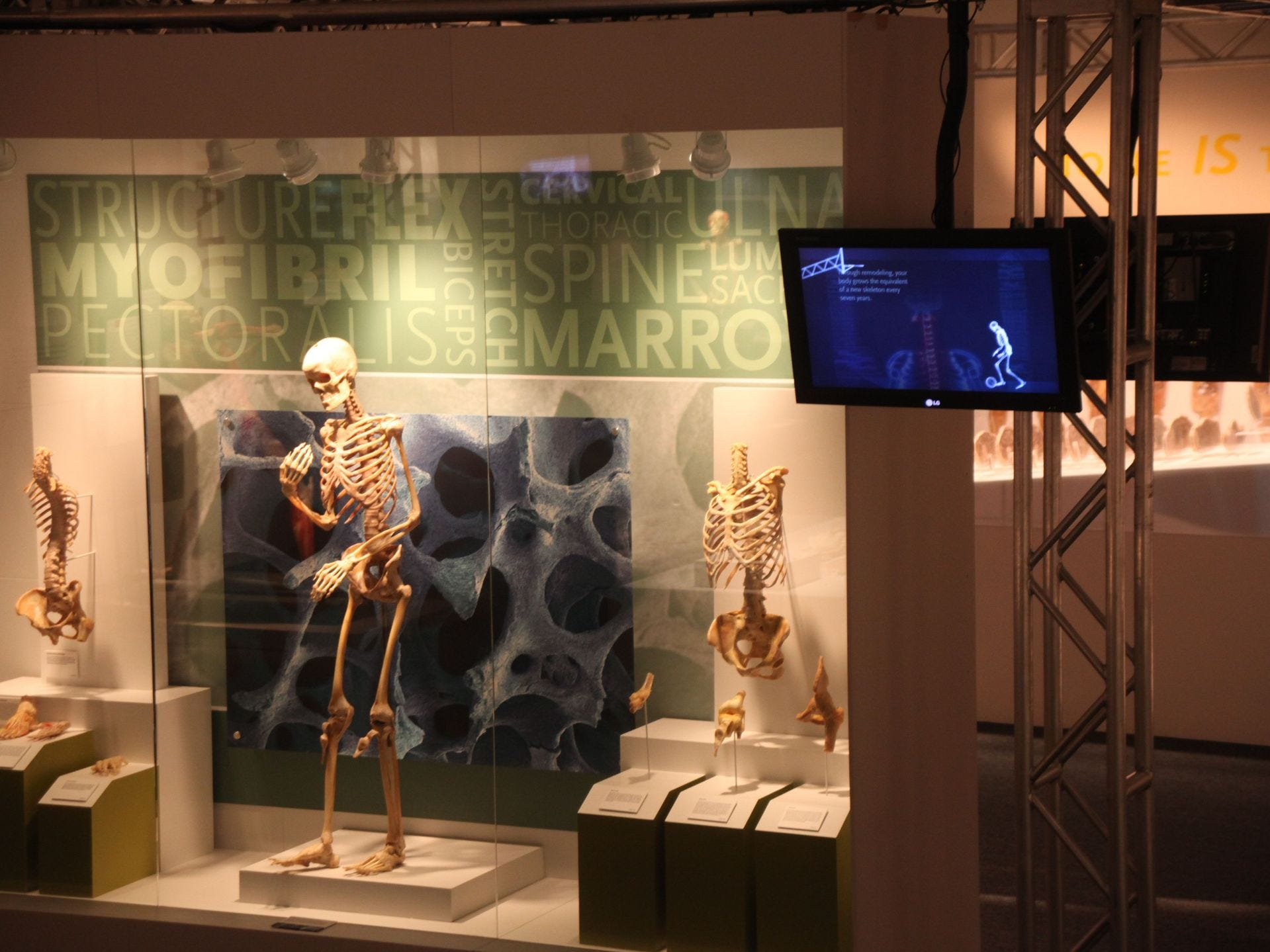 Las galerías incluyen el sistema esquelético, los músculos y el sistema nervioso, respiratorio, digestivo, urinario, reproductor, endocrino y circulatorio, el desarrollo fetal y el cuerpo tratado.