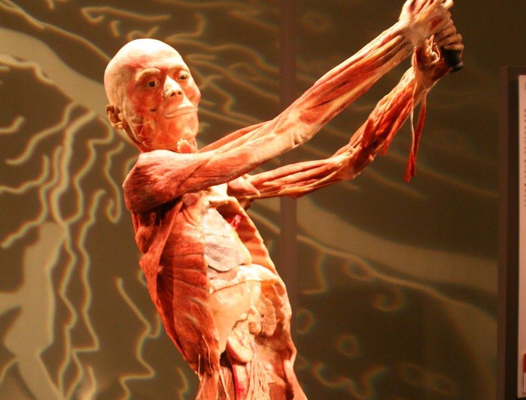 Los visitantes pueden ver lo que se encuentra debajo de la superficie de la piel.