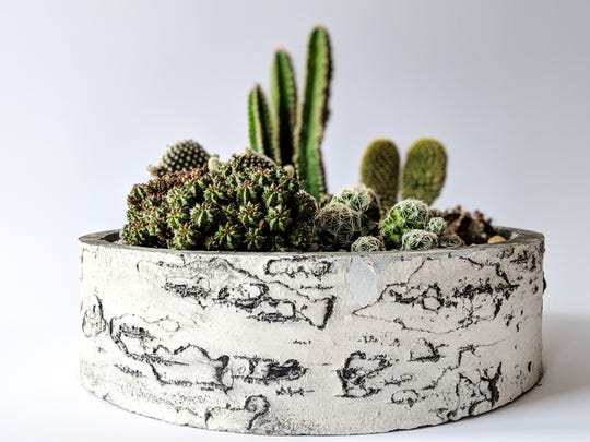 Succulents from Prickled Pink
