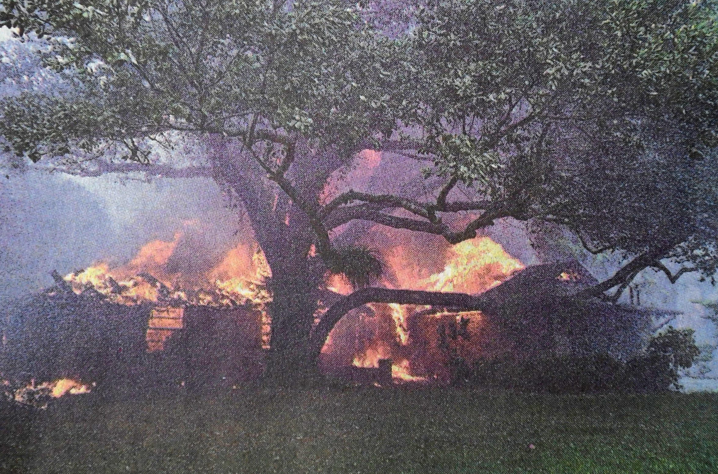 The brick house belonging to Michael and Linda Boogaart on Urbino Avenue erupts into flames while a tree in front of the home remains largely unscathed on Thursday, April 15, 1999, in Port St. Lucie.