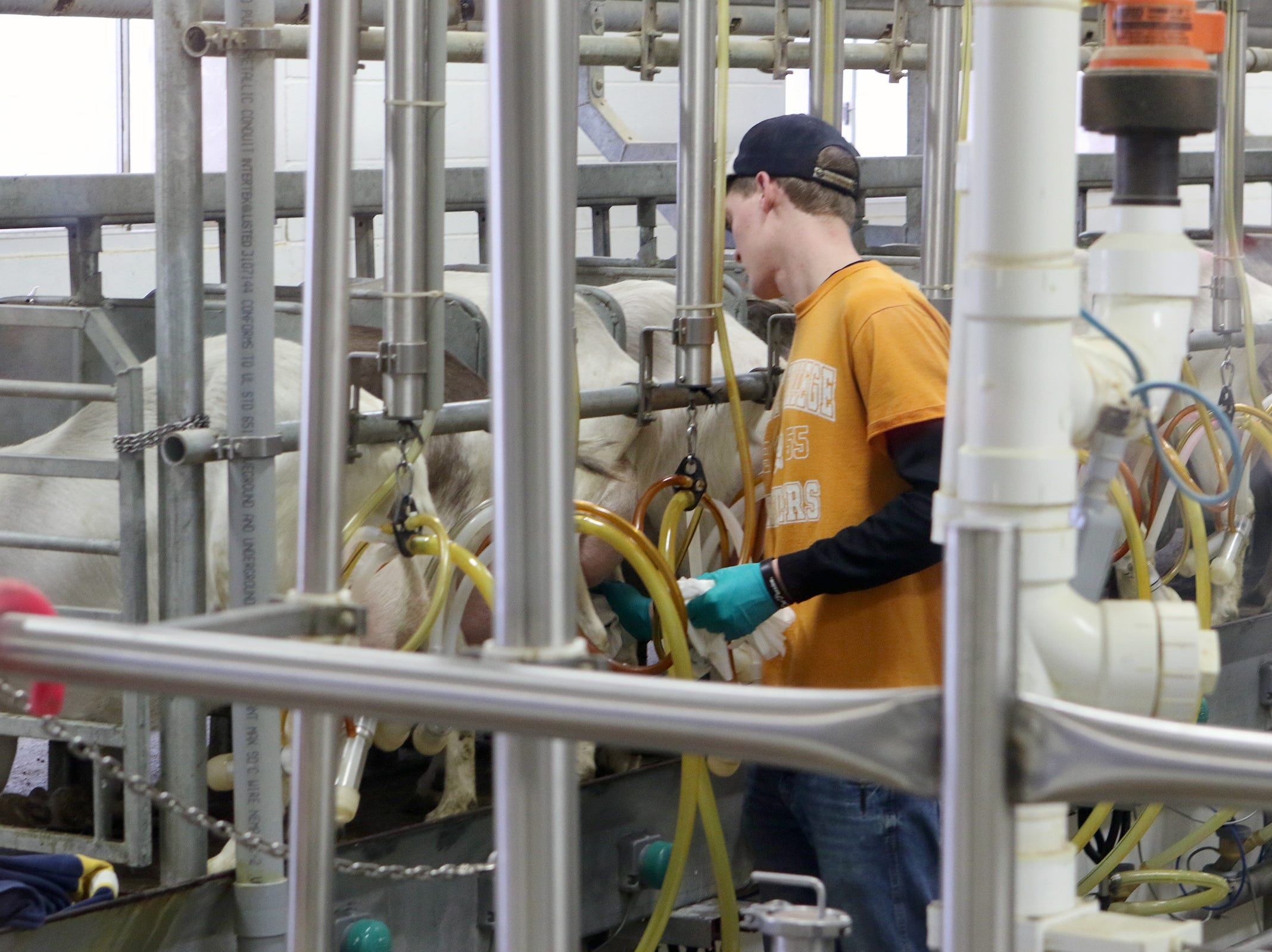 LaClare Family Creamery: From two goats to award-winning cheese