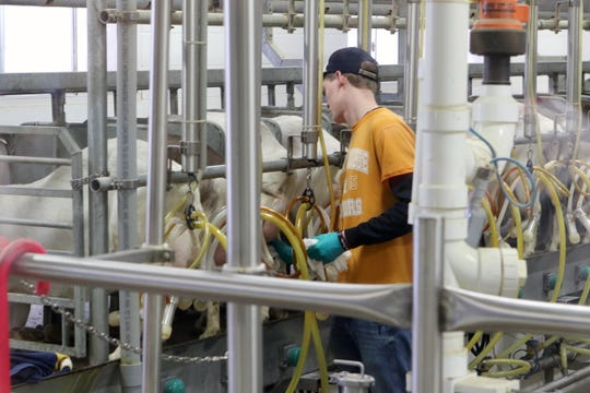 An employee at LaClare Family Creamery milks goats while a group of students participating in the Professional Dairy Producers of Wisconsin Youth Leadership Derby tour the Creamery on April 6.