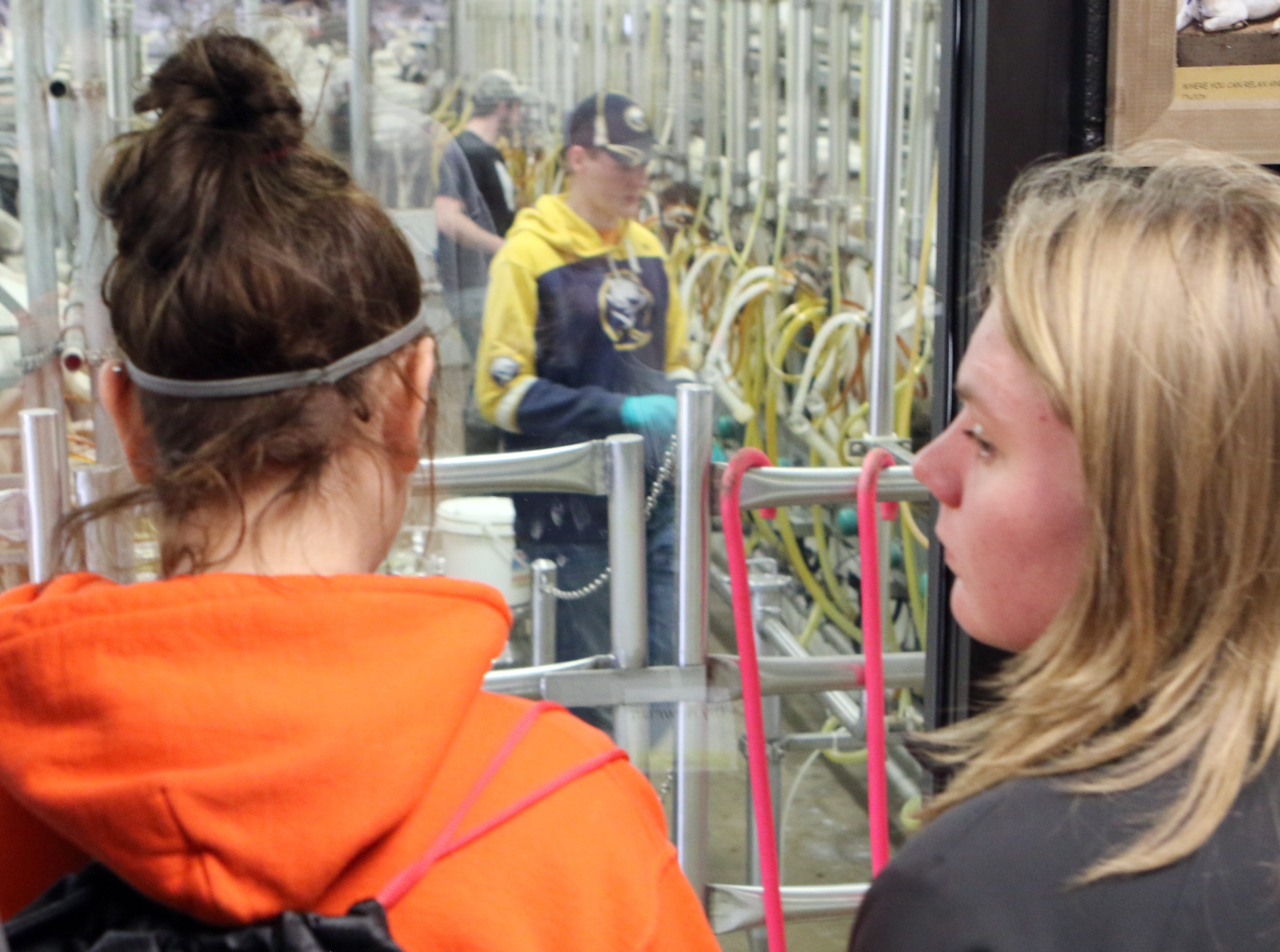 Students participating in the Professional Dairy Producers of Wisconsin Youth Leadership Derby watch goats being milked at LaClare Family Creamery, in Mount Calvary, on April 7.