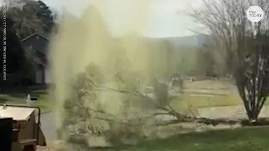 Slo-mo video of intense pollen bomb after tree gets cut down