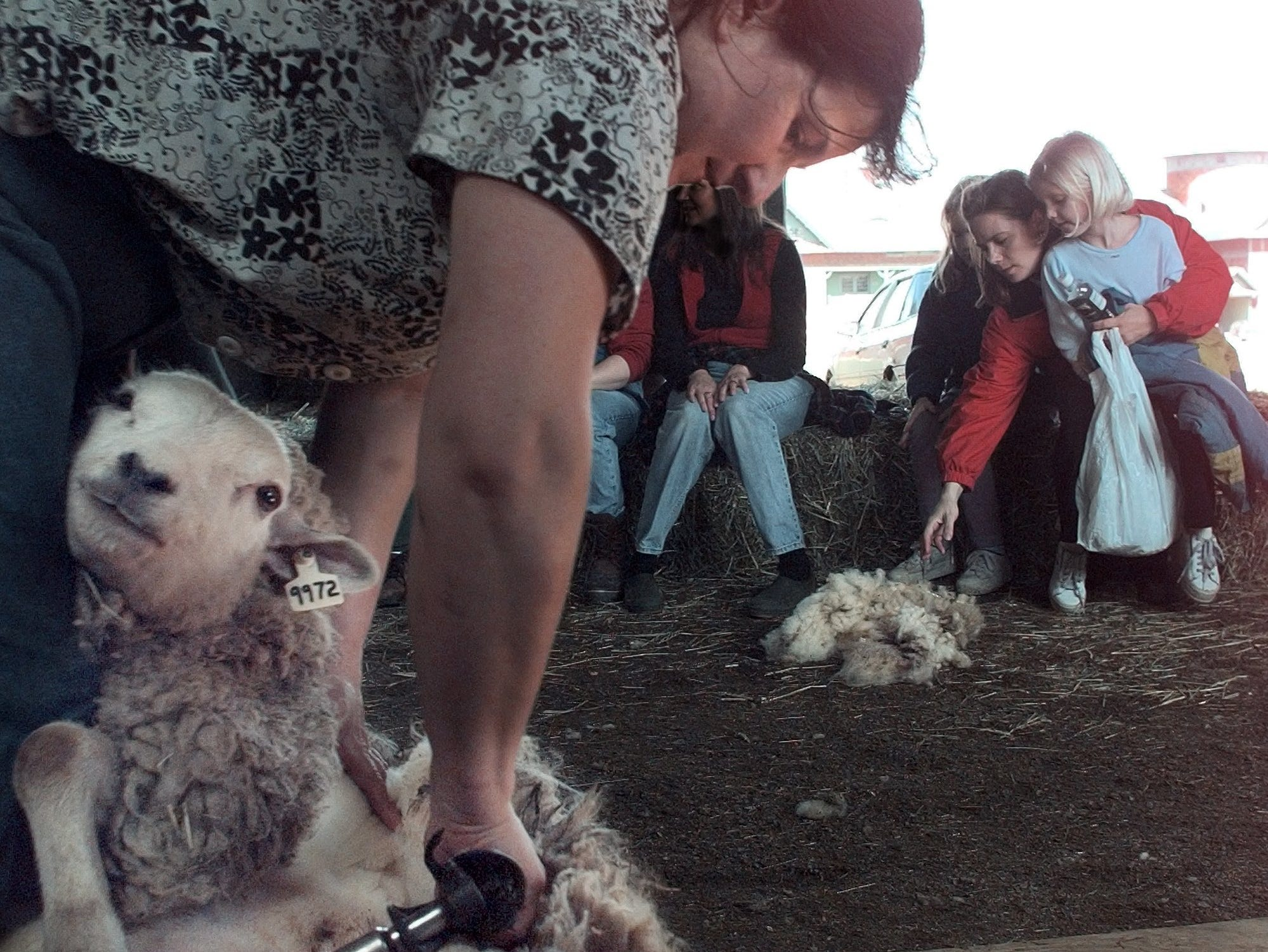 "Nicole Blanchard demonstrates how to shear sheep at ""Celebrate the Fleece "" day at Shelburne Farms Saturday as visitors check out the fleece. The event revolved around all the steps involved of producing wool, felt and yarn from sheep sheared at the Farms Saturday, Saturday, April 15, 2000."