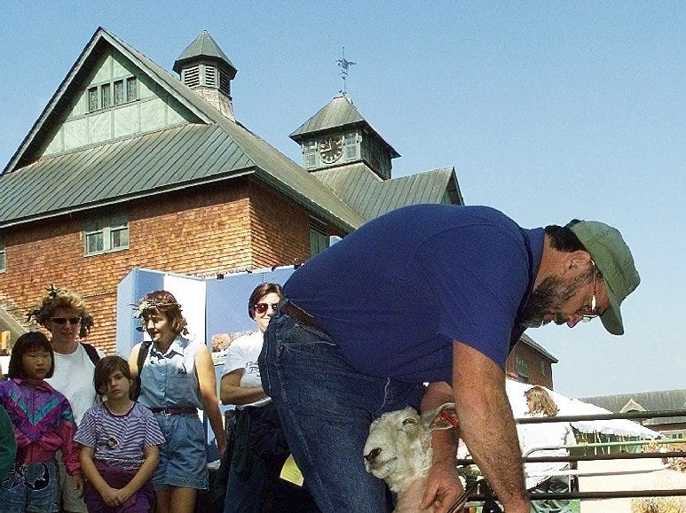 Joe Haddock of the Wool Hollow Lincolns farm in Jericho, demonstrates sheep shearing on a Lincoln sheep during the Shelburne Farms 1998 Harvest Festival on Saturday, September 19. Haddock says he keeps 100 sheep, and his wife Carol spins and weaves the wool into rugs.