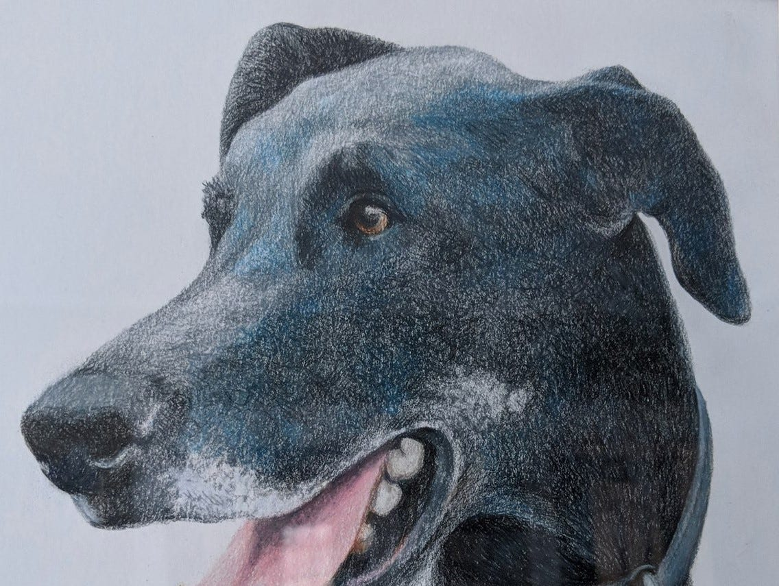 """Thom Van Benschoten """"was so kind that he made this beautiful drawing of my dog as a going-away gift when I left. Such a talented person and a kind soul,"""" wrote former Community Press writer Sarah Kelly."""