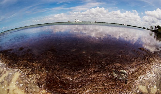 Red drift algae accumulates at Bowdtich Point on the north end of Fort Myers Beach on Monday April, 8, 2019. The non toxic smelly algae is showing up in patches throughout Southwest Florida. Some water quality scientists say that the algae is fed by higher nurient levels from runoff and other issues.