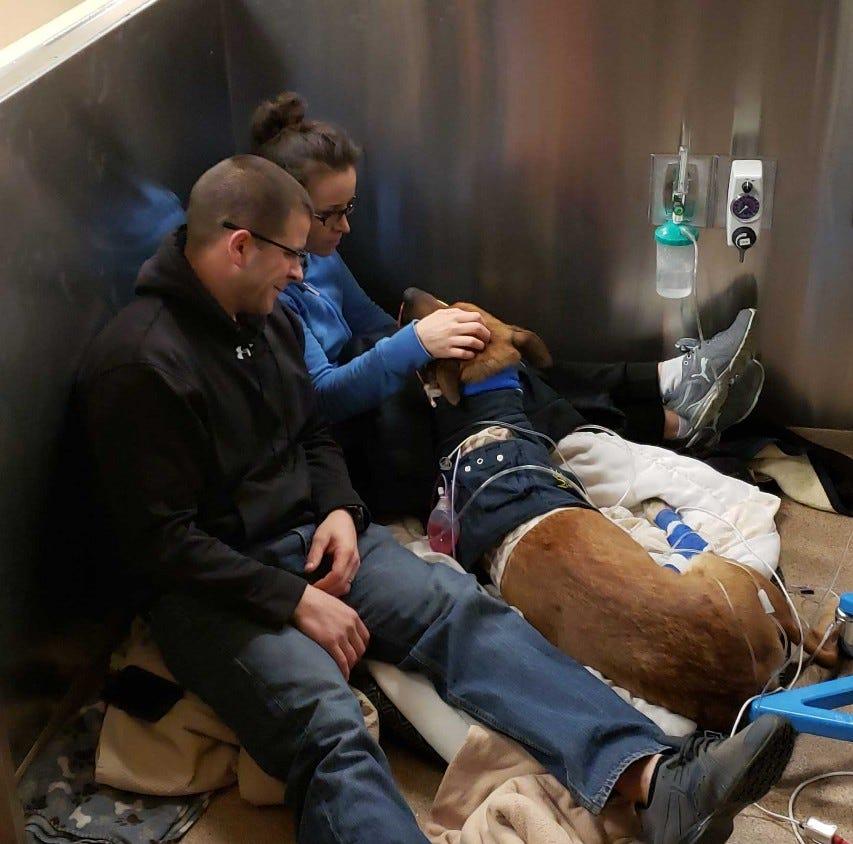 Green Bay Police dog Pyro up and walking following surgeries