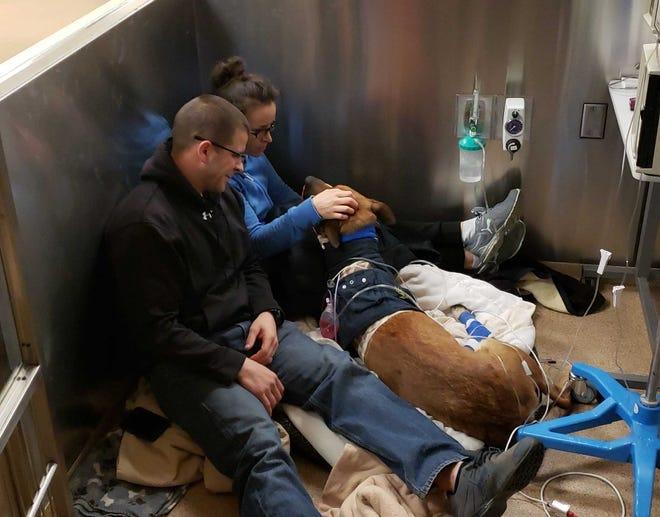 Green Bay Police officer Scott Salzmann and his wife, Karen Salzmann, visit with Pyro at the Animal Referral Center in Appleton.