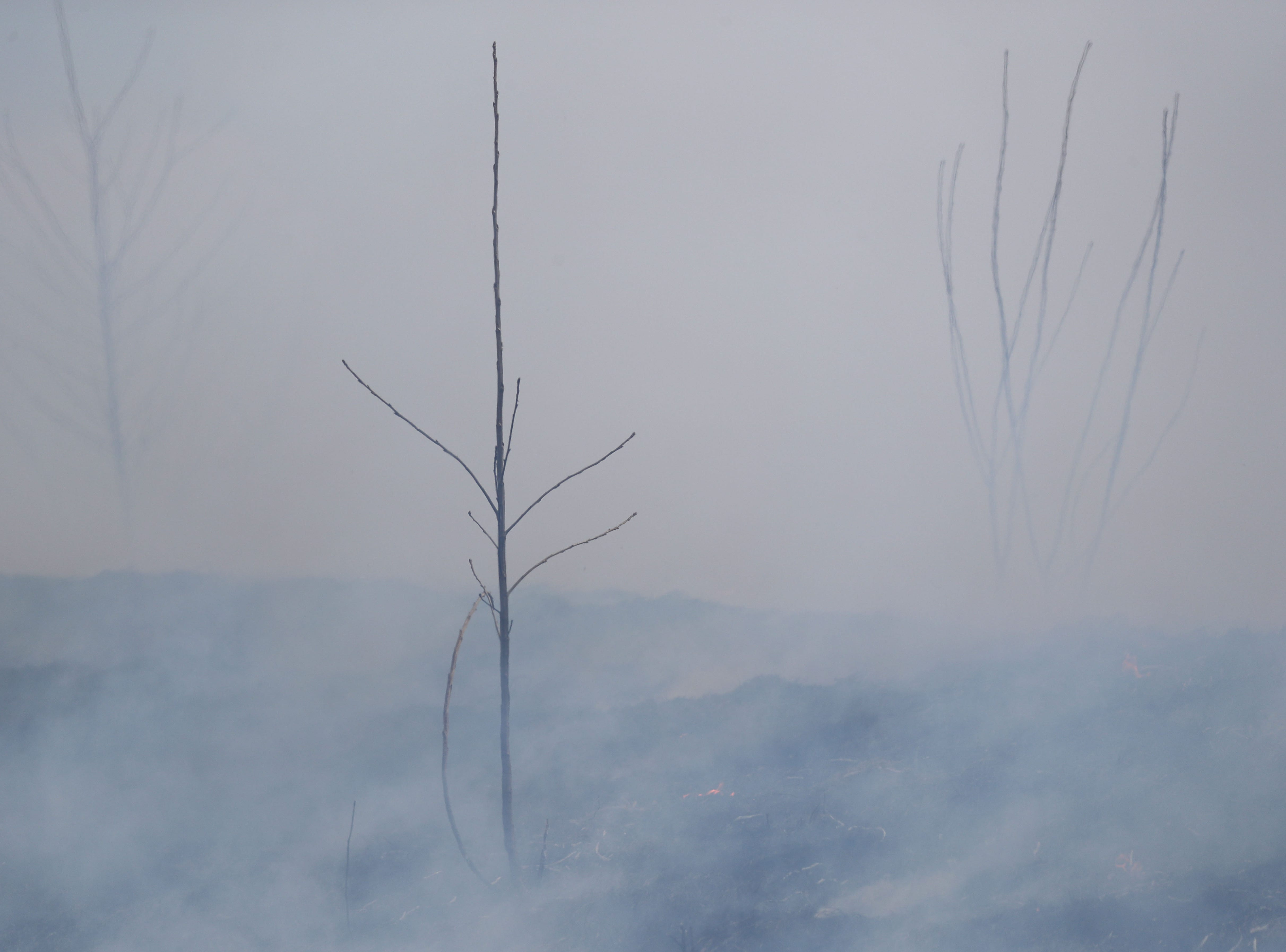 Weeds smolder during the controlled burn.