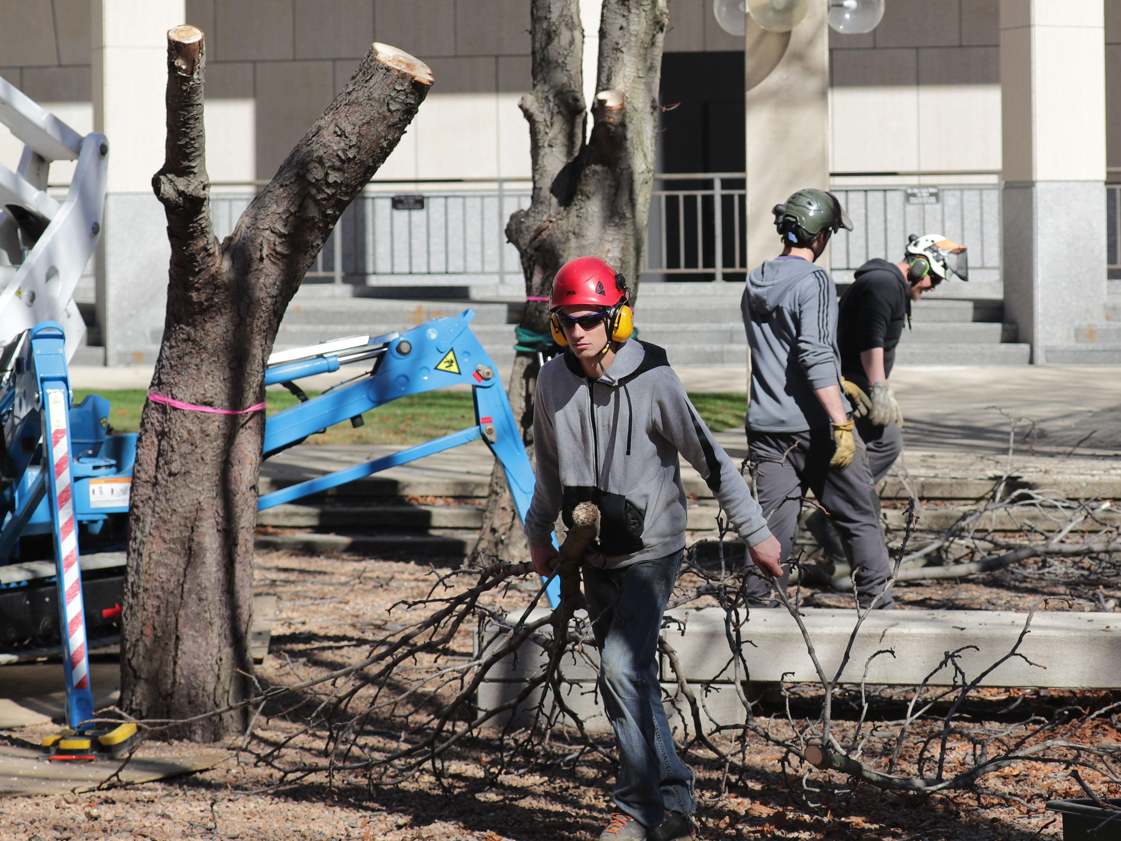 Marcus Dahms of Hoppe Tree Service removes branches.