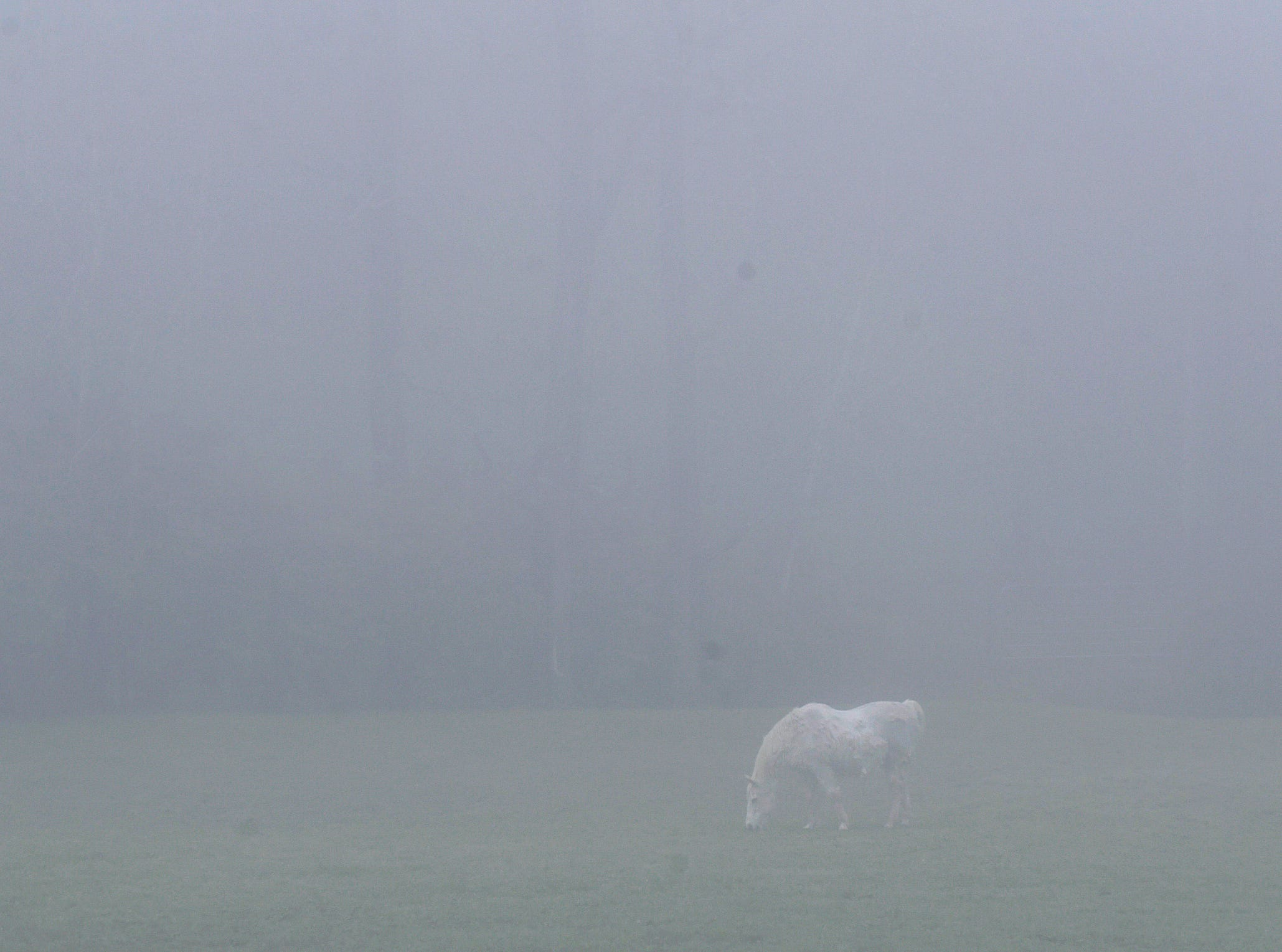 A horse gazes in a field on Murray Lane in Brentwood on Tuesday morning,  April 8, 2019. A dense fog advisory was issued for Middle Tennessee.