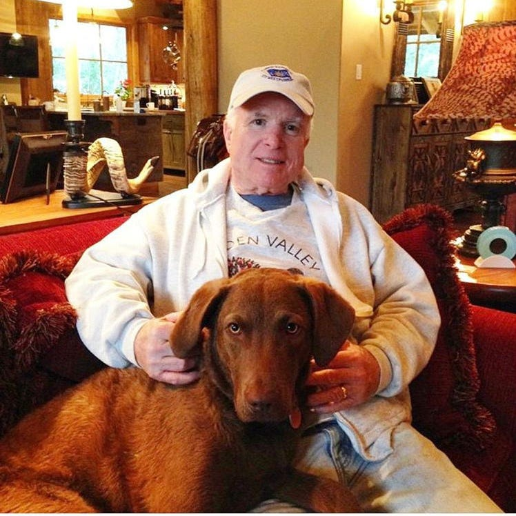John McCain's beloved dog Burma dies in 'tragic accident,' Cindy McCain says