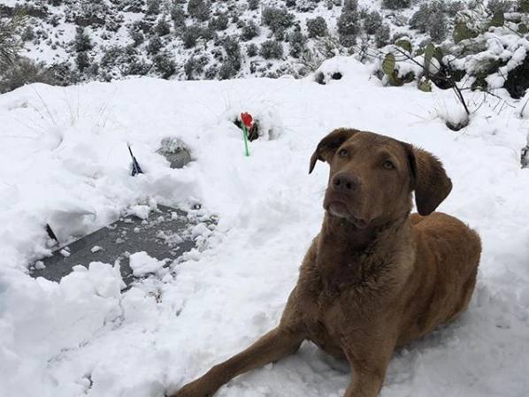 Burma sitting in the snow on February 22, 2019, by a marker the McCains placed for the late Sen. John McCain overlooking Hidden Valley Ranch.
