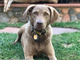 Burma, the McCain family's dog, died on April 8, 2019.