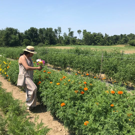 Common Ground Farm in Wappingers Falls is hosting the Opening of the Fields walk April 13. Naina Maloni is shown picking flowers at the farm last July as part of her CSA share.
