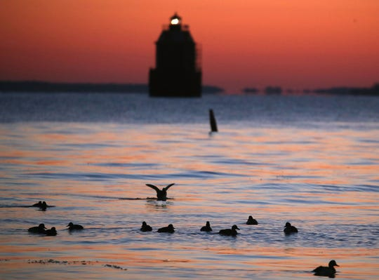 Ducks swim in the frigid waters of the Chesapeake Bay as the Sandy Point Shoal Lighthouse looms in the distance in Skidmore, Maryland.