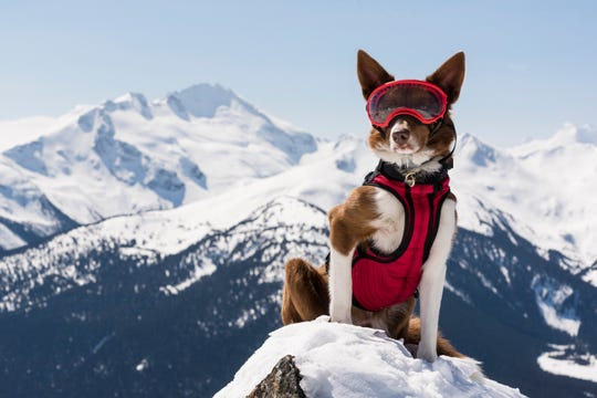 Henry is an avalanche rescue expert saving lives in the mountains of British Columbia.