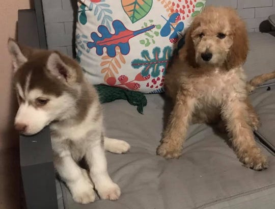 Two teens learned a lesson after they stole two puppies. The girls will not be charged because the puppy boutique owner did not want to press charges.