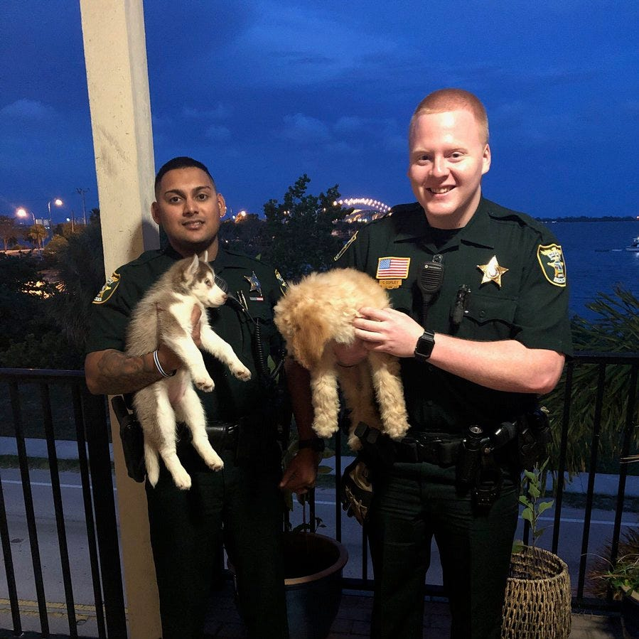 Martin County deputies recover two puppies stolen from Port St. Lucie puppy boutique