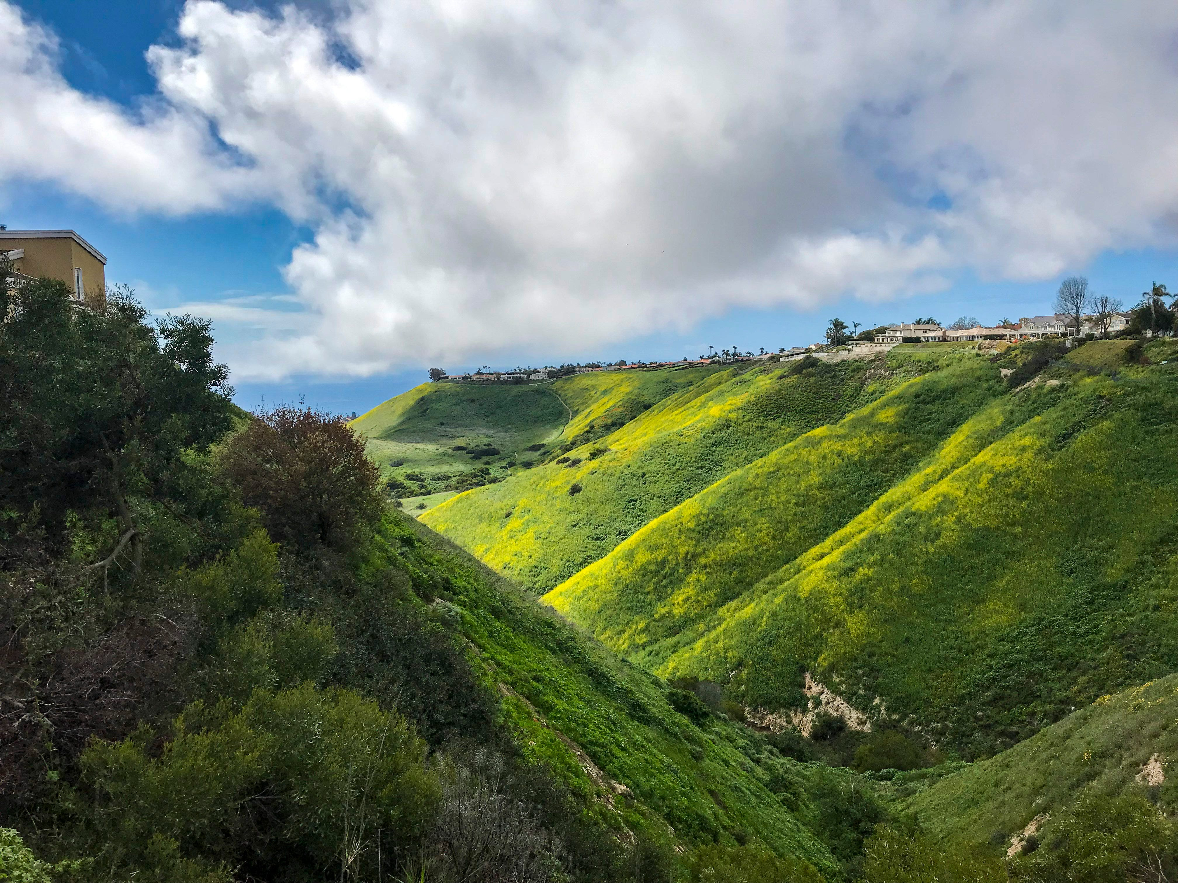 Homes line one of the canyons in Rancho Palos Verdes. The many acres of open space in the city provide breathtaking views and public access to wild places between city subdivisions, but the vegetation poses a substantial fire risk.