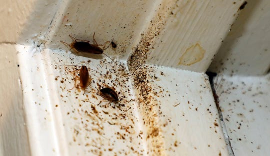 In this Feb. 20, 2019 photo, roaches line the door jam of Destiny Johnson's apartment in Cedarhurst Homes, a federally subsidized, low-income apartment complex in Natchez, Miss. The complex received at least three failing inspection scores in recent years. Upset with conditions, Johnson moved out in late March. (AP Photo/Rogelio V. Solis)