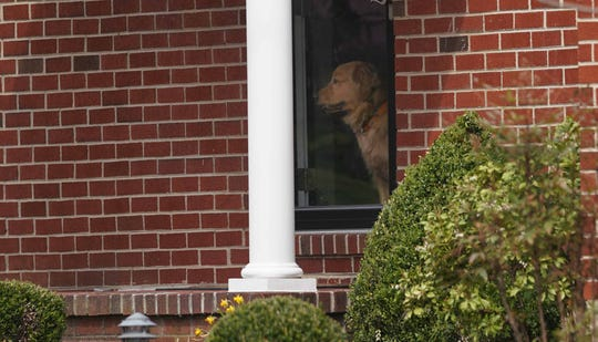 A Golden Retriever peers out a storm door of the family home of Staff Sgt. Christopher Slutman.