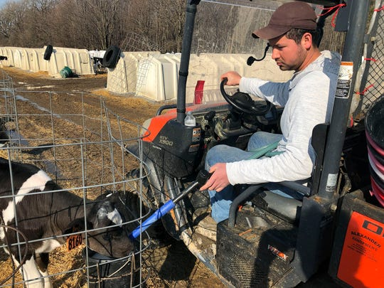 Ismael Castellanos feeds calves on a the dairy farm where he works, in Bethany, New York . A renewed push around the country to let immigrants here illegally get driver's licenses is resonating among those working on farms and orchards.