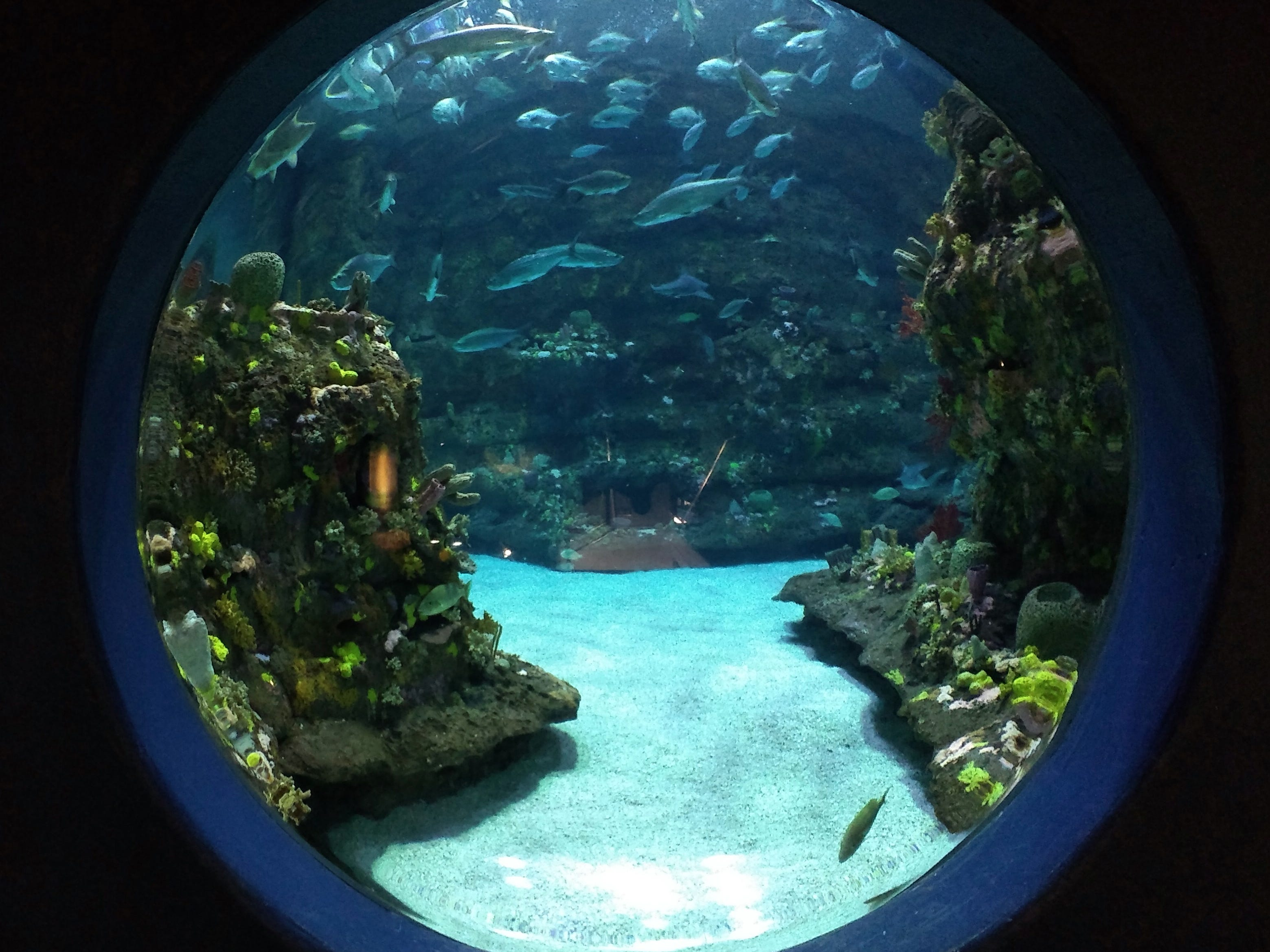 The aquarium is a major area attraction. Exhibits showcase the diversity of marine life off the coast, where the Labrador and Gulf water currents mesh.
