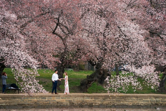 In this March 29, 2019, photo, a couple poses for pictures at the Tidal Basin in Washington amid the flowering cherry trees. For many of these occasions, you'll want a professional on hand who can do more than add a fancy filter to an ordinary snapshot. But hiring a photographer to capture life's important milestones can be pretty pricey.
