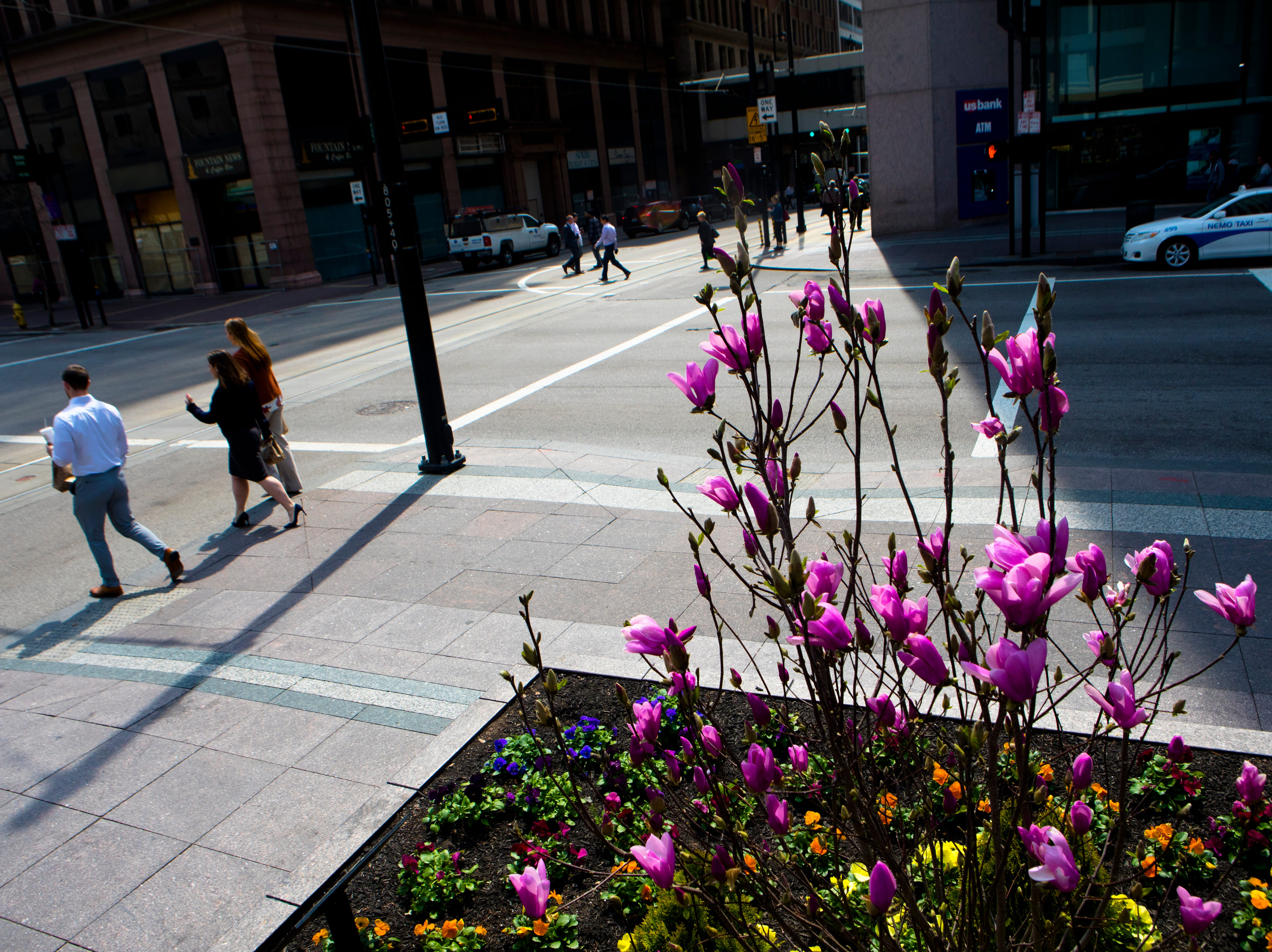 People walk past a blooming magnolia at Fountain Square in Cincinnati on Wednesday, April 10, 2019.