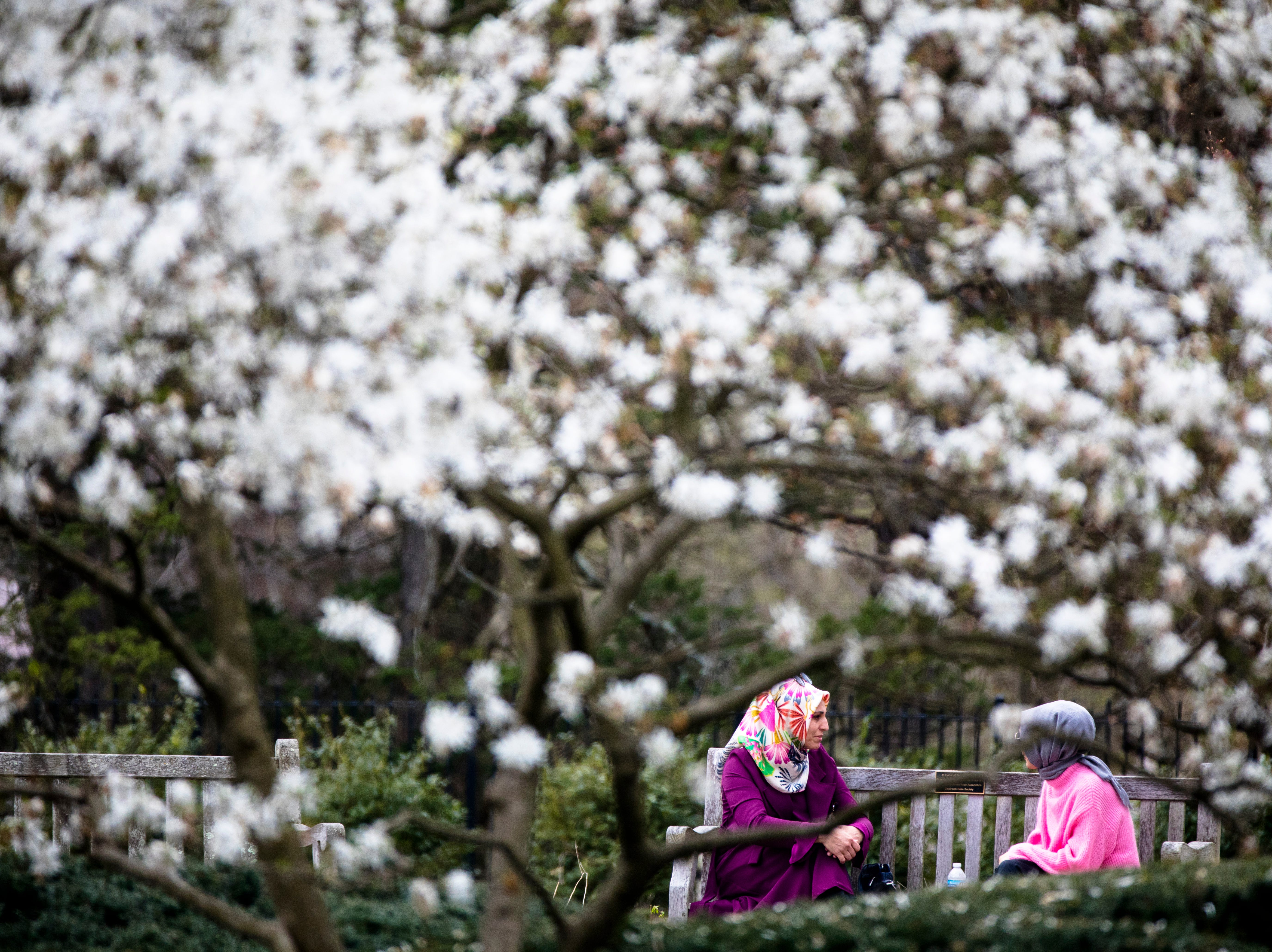 Ayse Gonen talks to Nesibe Karatas near blooming Star Magnolia trees at Ault Park in Hyde Park on Wednesday, April 10, 2019.