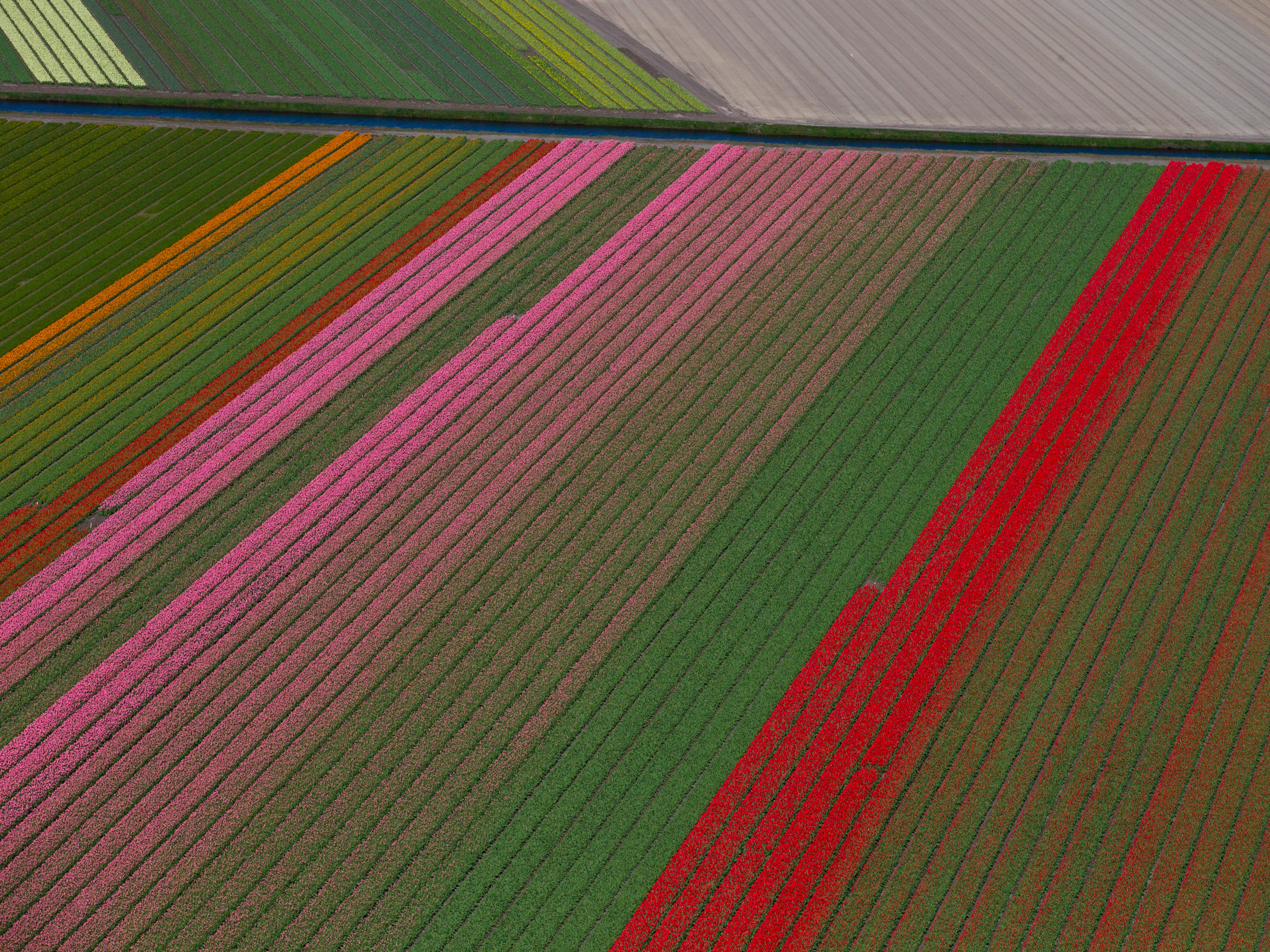 """This is an aerial view of flower fields surrounding the Keukenhof spring park in Lisse, near Amsterdam, Netherlands, Wednesday, April 10, 2019. For years, the Dutch agriculture, horticulture and logistics industries have been refined to swiftly deliver their produce to customers in the United Kingdom. The so-called """"hard"""" Brexit could seriously impact the supply chain with delays expected at British and European ports if Britain leaves the EU without a deal. An emergency summit in Brussels, on Tuesday, was considering Britain's request for a further delay in leaving the EU. Keukenhof attracts around 1 million visitors from all over the world in the eight weeks it is open and showcases 7 million bulb flowers that bloom in spring promoting one of the Netherlands' best-known export products. The 19th of May is the last day Keukenhof is open to the public."""