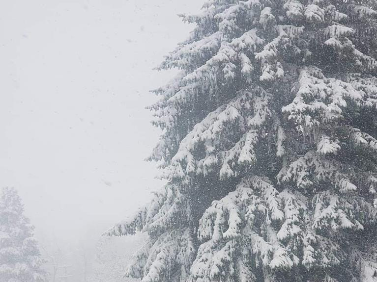 In Loveland: Scenes from the Northern Colorado snowstorm on April 10, 2019.