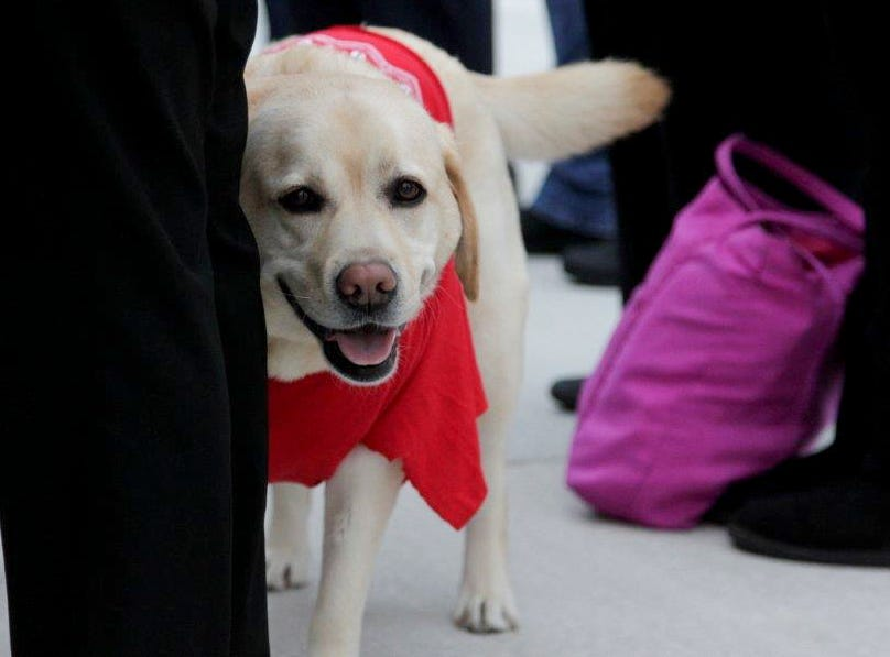Sophie looks around while wearing a red bandana in support of the Red for Ed movement, Wednesday, April 10, 2019, outside of Lafayette Jefferson High and Tecumseh Middle School in Lafayette.