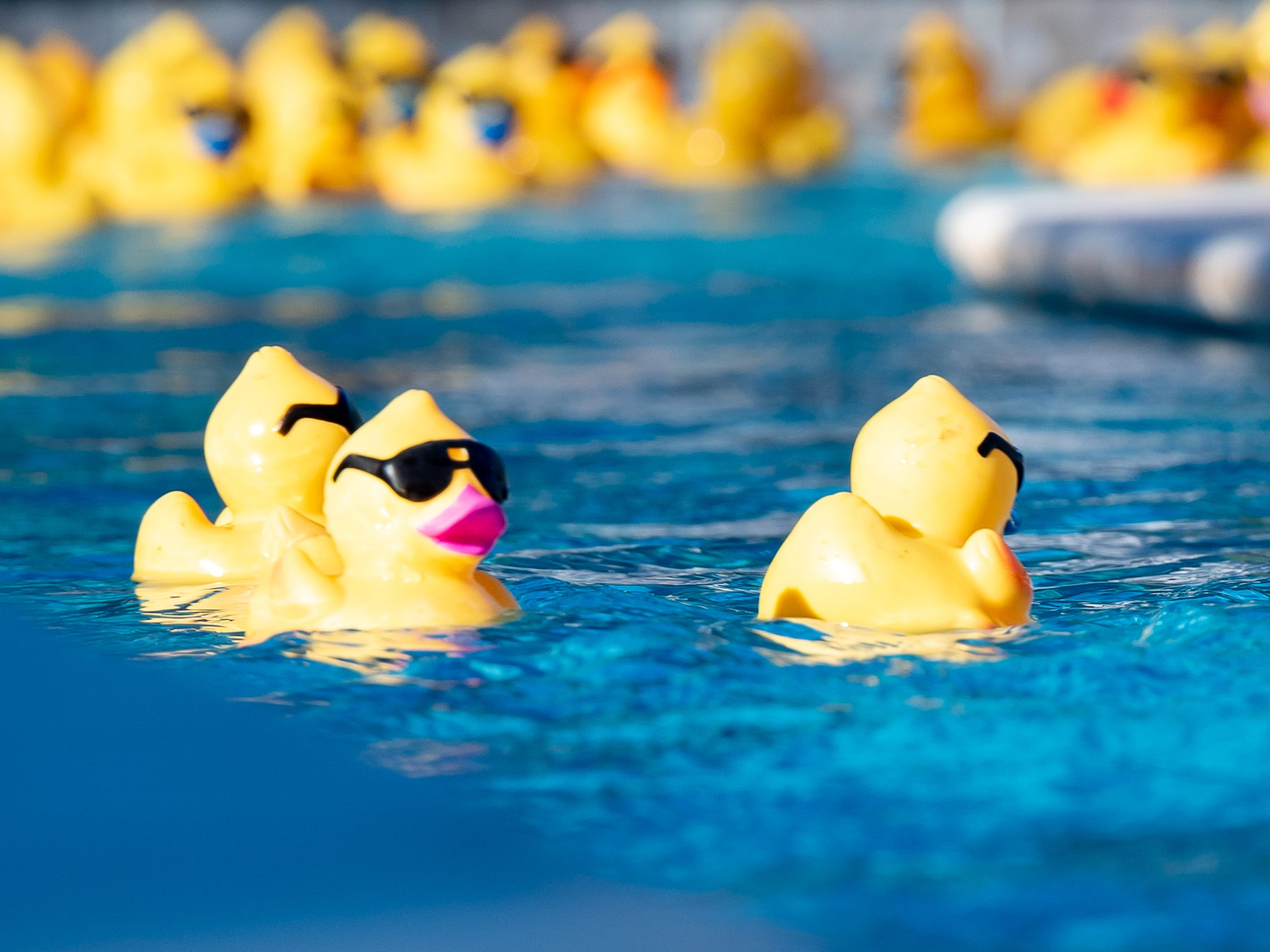 The Great Acadiana Running of the Ducks. Wednesday, April 10, 2019.