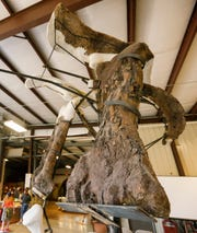 The fossilized leg bone and pelvis of Henry the triceratops.