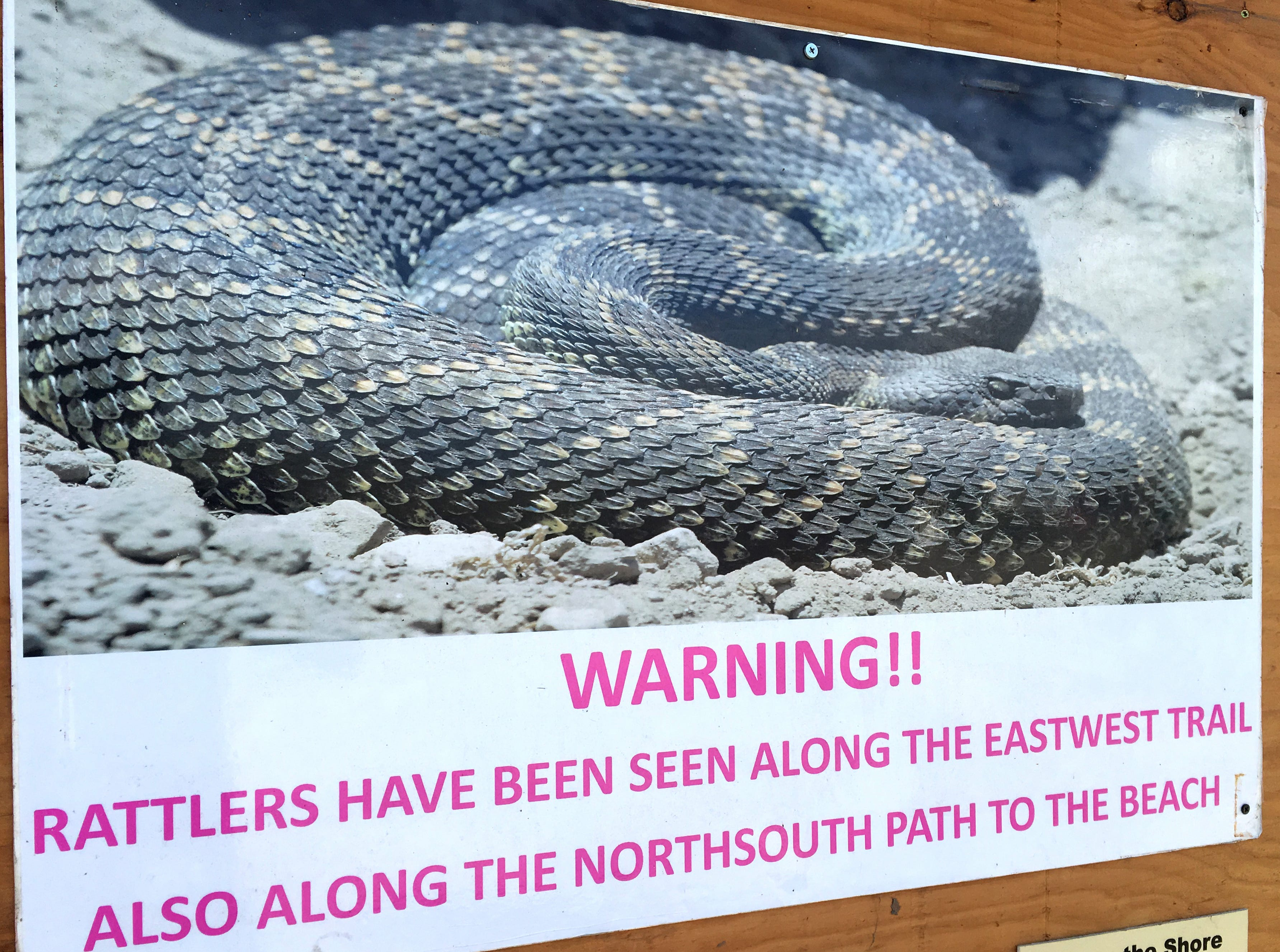 A sign warning visitors of rattlesnake sightings hangs at an information kiosk near the entrance to Ormond Beach in Oxnard after multiple sightings were made along a trail with thick vegetation growth.
