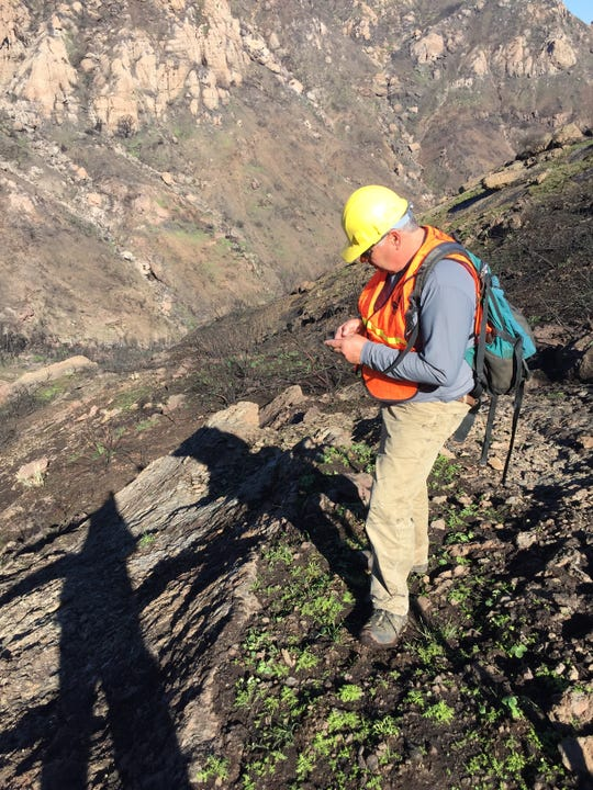 Botanist Ken Niessen surveys areas in and around the Santa Monica Mountains in late 2018.