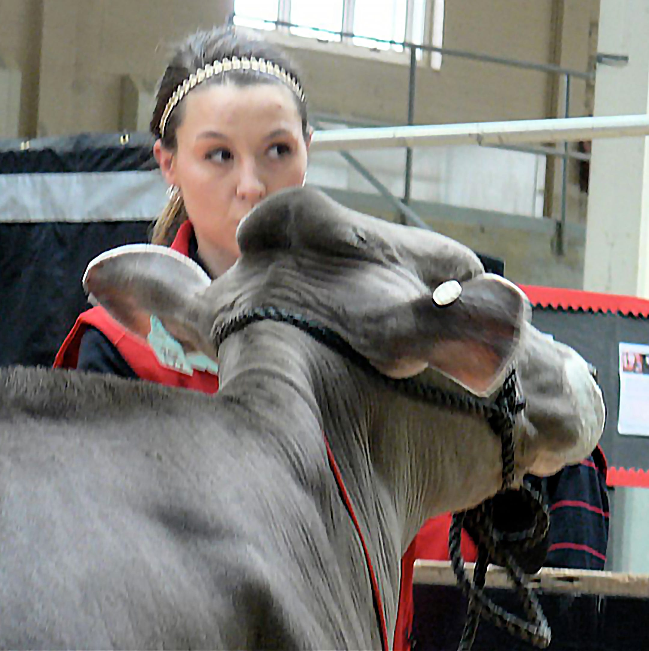 19th Badger Invitational Dairy Sale: another success