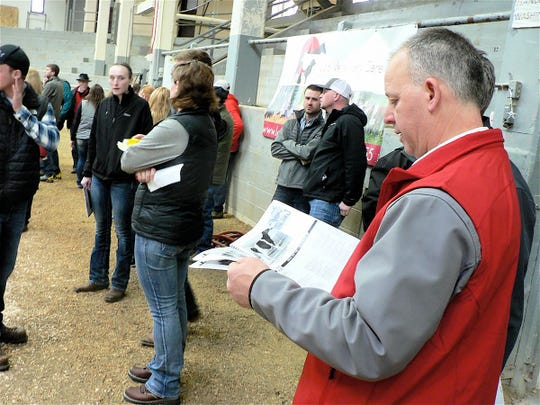 Studying the catalog at the 19th Badger Invitational Dairy Sale.