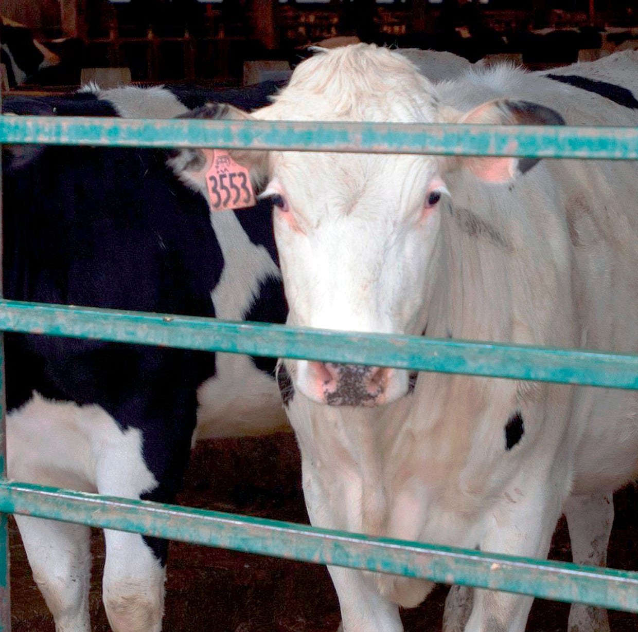 Wisconsin sheriff says stray voltage may have killed cows
