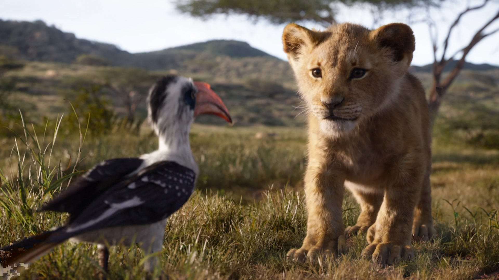 'The Lion King': See what the circle of life looks like in live action