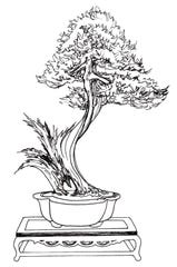 Line drawings of Michelle Dougherty's trees are available inside Zuma Coffee for patrons to color and add to the exhibit.