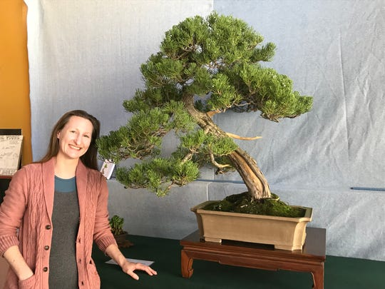 Michelle Dougherty stands beside a nearly 100 year old juniper on display inside Zuma Coffee in Marshall. The tree is one of 200 Dougherty has helped shape as a tree artist.