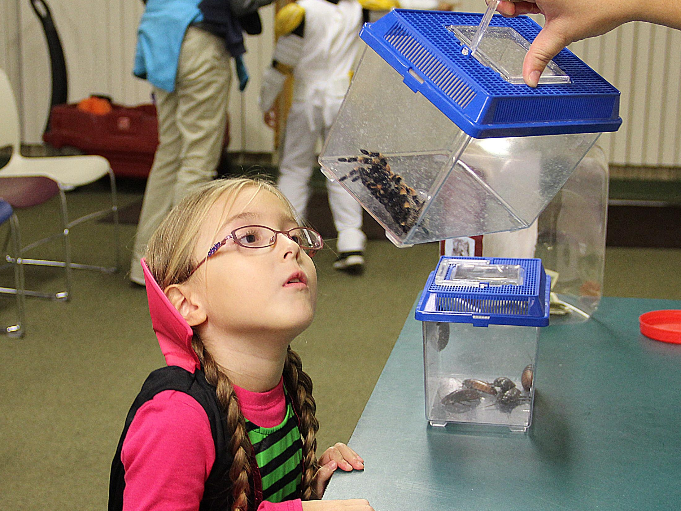 A girl looks at a tarantula during Binder Park Zoo's 2012 Zoo Boo.